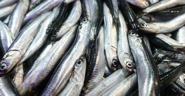 En Çok Alerjiye Neden Olan Balık Türü Hamsi!