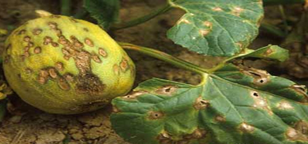 Cevizde Yetersiz Beslenmenin Yaratabileceği Sorunlar