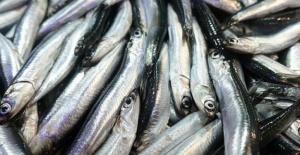 En Çok Alerjiye Neden Olan Balık...