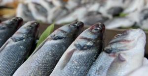 Doğu Karadeniz Su Ürünleri İhracatından 44,2 Milyon Dolar Kazandı